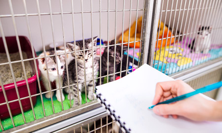image of kittens watching vet write on paper
